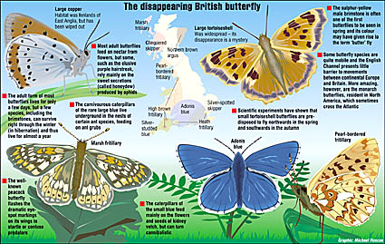 Map and drawings of butterfly habitats in UK